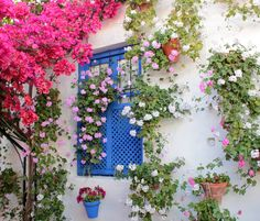 May in the Patios of Córdoba, Andalusia | Spain...