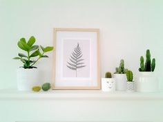Zimmerpflanzen - für ein grünes Zuhause! #urbanjungle #zimmerpflanzen #pflanzen #pflanzendeko #deko #home #interior #decor #cactus #kaktus #kakteen #töpfe #plants