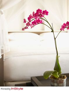 """Tommy Hilfiger's Favorite Fall Home Decor Trends —Fresh Flowers:   """"My wife Dee and I love to have fresh flowers throughout our home, those bursts of color really add that something extra to each room. Our Mustique home is in the Caribbean, so we always have lots of tropical and exotic flowers on display."""""""