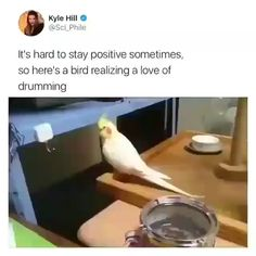 Exploring the bond in their own habitat is an art where animals are invincible. Cute Little Animals, Cute Funny Animals, Funny Cute, Funny Birds, Cute Birds, Funny Animal Memes, Funny Animal Pictures, Funny Parrots, Cute Animal Videos