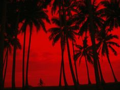 Cyclist and Palm Trees Silhouetted Against Red Sky at Sunset in .