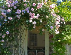 10 Easy Perennials for the Seaside Garden: Gardenista