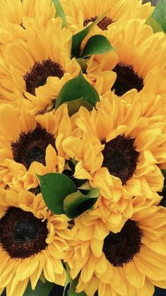 Wholesale Flowers And Supplies, Wedding Flowers, Plants, Plant, Planets, Bridal Flowers