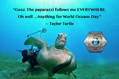 appreciate when we celebrate even if they are camera shy. Go ahead and make a habit of honoring our and all her every day. Sci Fi Authors, Ocean Day, Camera Shy, Oceans Of The World, Ocean Creatures, Turtles, Science Fiction, Flow, Dreams