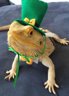 PetsLady's Pick: Freaky St. Patrick's Lizard Of The Day ... see more at PetsLady.com ... The FUN site for Animal Lovers