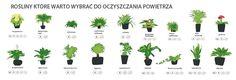 Rośliny do ogrodu wertykalnego. Paproć (Davallia) Plumeria.sklep.pl Herbs, Garden, Plants, Drawing Rooms, Garten, Lawn And Garden, Herb, Flora, Gardening