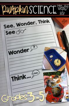 See, Wonder, Think /
