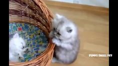 Funny cat video - Cute kitten relax Compilation 2016