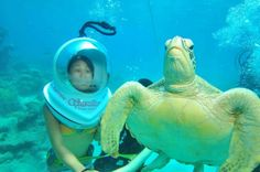 Best job in the world: meet your new colleagues video world funny videos, r World Funny Videos, Funny Animal Videos, Videos Funny, Rare Animals, Animals And Pets, Funny Animals, Australian Animals, Great Barrier Reef, Love Pictures