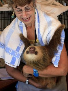 Sloth sanctuary in Cahuita de Limon, Costa Rica. I want to visit this amazing place! My dream.....
