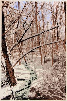 """Bidwell""""s Creek"""