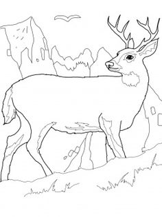 Deer Coloring Page, add pipe cleaner antlers! | Recipes & Party ...