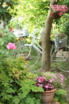 Blue Hortensia - taki rower mam w swoim ogrodzie !