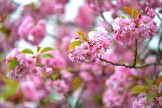 beautiful Last Month, Harpers Bazaar, Flowers, Plants, Life, Beautiful, Plant, Royal Icing Flowers, Flower