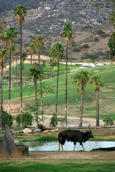 San Diego Wild Animal Park, California by slworking2