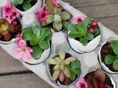 Idea Of Making Plant Pots At Home // Flower Pots From Cement Marbles // Home Decoration Ideas – Top Soop Container Plants, Container Gardening, Gardening Tips, Garden Plants, House Plants, Egg Shell Planters, Pot Jardin, Pot Plante, Fru Fru