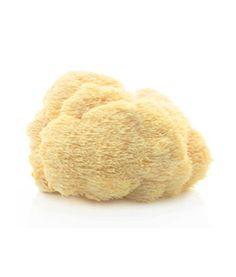 Hericium / Pom Pom - im Internet bestellbare Pilzbrut für die Pilzzucht