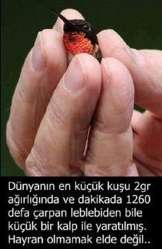 Subunallah ❤️ maşallah Interesting Information, Small Birds, Animals And Pets, Allah, Minis, Fun Facts, Food And Drink, Birds, Quotes