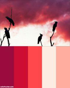 Kakadus Color Scheme ; pink sunset