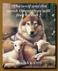 """The wolf and the lamb themselves will feed as one, and the lion will eat straw just like the bull...They will do no harm nor cause any ruin in all my holy mountain,"" Jehovah has said."" ~Isaiah 65:25"