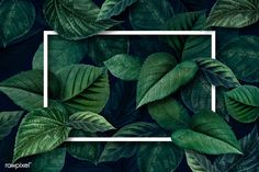 premium psd of White frame on a metallic green leaves textured White frame on a metallic green leaves textured background illustration Macbook Wallpaper, Computer Wallpaper, Girl Wallpaper, Leaf Texture, Texture Art, Green Texture, Laptop Backgrounds, Wallpaper Backgrounds, Desktop Wallpapers