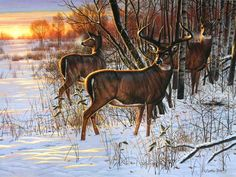 whitetail deer paintings whitetail art prints birthday ideas pinterest deer paintings. Black Bedroom Furniture Sets. Home Design Ideas