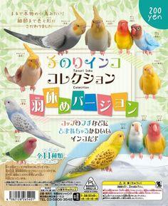 Japan Bird Club Lovebird Cockatiel Parrot Decorate Cup figure # full set of 11