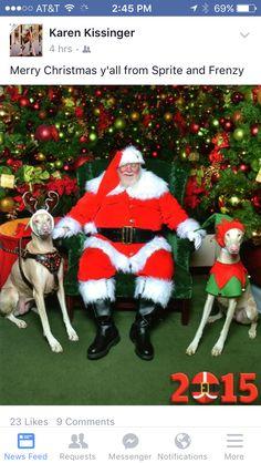 Albino Dobermans Sprite and Frenzy seeing Santa