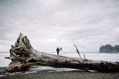 Such a cool place to get married...love the tree! Photo Credit: http://ryanflynnphotography.net/. From: http://greenweddingshoes.com/olympic-peninsula-beach-elopement-chelsea-zack/.