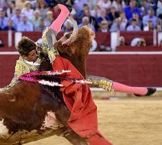 Notiferias Toros en Venezuela y el Mundo: Albacete: de un cortijillo de ensueño a la esperan...