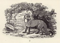 Final Major Art Blog: Woodcuts by Thomas Bewick with medieval written attributes.