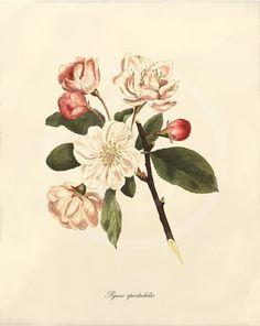 Botanical Tattoo Inspiration