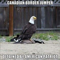 Humor for patriotic Americans - funny picture of American eagle Funny Shit, Haha Funny, Funny Cute, Funny Memes, Funny Stuff, Funny Things, Random Stuff, True Memes, Top Funny