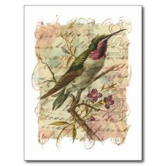 Vintage Hummingbird Post Cards Yes I can say you are on right site we just collected best shopping store that haveDeals          Vintage Hummingbird Post Cards today easy to Shops & Purchase Online - transferred directly secure and trusted checkout...