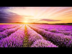 Hahnemuhle PHOTO RAG Fine Art Paper (other products available) - Lavender field at Plateau of Valensole, Provence, France. - Image supplied by Fine Art Storehouse - Fine Art Print on Paper made in the UK Share Pictures, Lavender Fields, Canvas Prints, Art Prints, Travel Photographer, Champs, Beautiful Images, Guided Meditation, Stock Photos