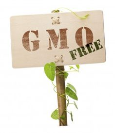 Helps us prevent the bad effects of the unlables GMO's we are getting daily! Use these five natural supplements to detox your body of toxic GMO foods Gmo Facts, Genetically Modified Food, Natural News, Dog Diet, Thing 1, Detox Your Body, Natural Supplements, Alternative Health, Along The Way