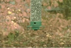 Pictures of the week -99 pics- Bird Feeder Squirrel Proof (Gif)