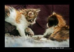 Photo du GEOnaute : RM7 Trouvez la meilleure assurance pour votre animal de compagnie grâce à ce comparateur en ligne