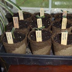 Starting Vegetable Seeds Indoors