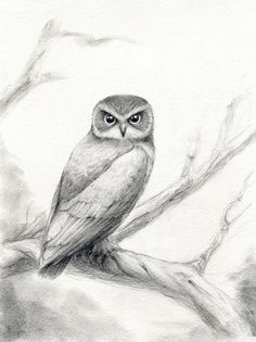 Owl Drawings Black and White | Tina Burke - All things Bird and Beautiful
