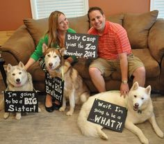 Baby pregnancy announcement with multiple dogs