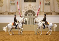 Lipizzaner stallions enchant the public with classical school jumps at the Spanish Riding School in Vienna ✧ World Famous Horses of Imperial Austria. Most Beautiful Animals, Beautiful Horses, Majestic Horse, Spanish Riding School Vienna, Lippizaner, Lipizzan, All The Pretty Horses, White Horses, Austria