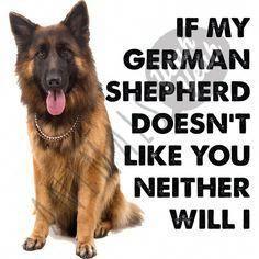 Put German Shepherds