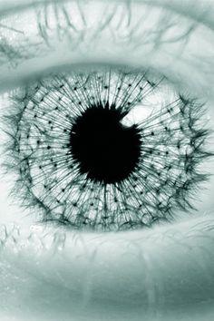 Eye - window to the soul