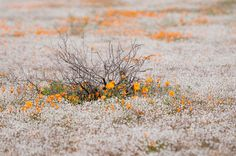 West Coast National Park, South Africa Daisy Field, Spring Flowering Bulbs, St Helena, Cape Town, Wildflowers, Trees To Plant, Spring Time, West Coast, Wonders Of The World