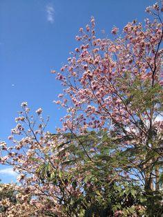 Árvore Ipê  www.cristaindústria.com.br
