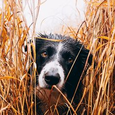 Hiding in the long grass…