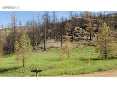 37 Black Mountain Ct, Livermore, CO 80536 — High Park Fire impacted property. Sunny, gently sloped with rock outcroppings. Property has rough driveway to camping/picnic spot. Meadow is greening. Serviced by community sewer system, tap fee has been paid.