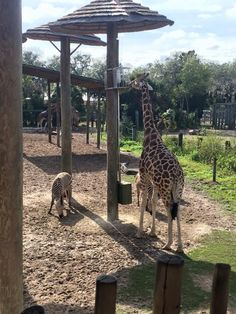 Lowry Park Zoo - Tampa, Florida; January, 2015