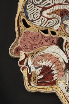Rolling paper usually results in massive consumption of doritos and Little Debbie snacks. In this case, thousands of rolled papers come together to create an beautiful artistic representation of an anatomical cross-section of the human body.